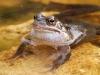 frog-web-2