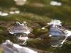 frog-web-3