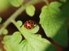 19 spot Ladybird 1 30dpi