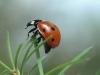 7spot Ladybird 1 12x8 30dpi