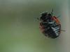 7spot Ladybird 2  12x8 30dpi