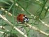 7spot Ladybird 4 12x8 30dpi