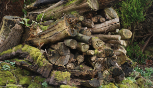 Logpile in wildlife garden