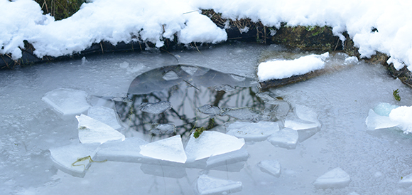 A hole in the pond ice for birds and other garden wildlife creatures.